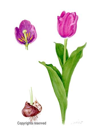 Paintings Flowers   Joy Studio Design Gallery - Best Design