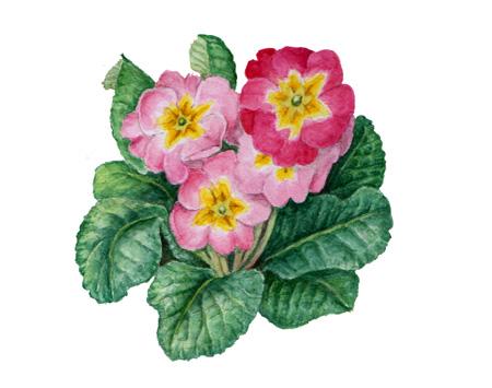 Drawing Images Of Flowers Botanical Art, Botanic...